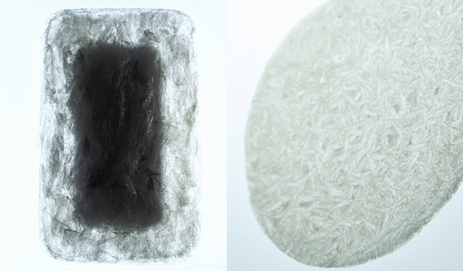 「AGAR PLASTICITY – A POTENTIAL USEFULNESS OF AGAR FOR PACKAGING AND MORE」