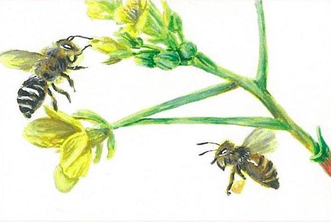 「ミツバチの仕事」