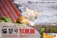 【イベント】「尾道イーハトーヴ 猫祭り2016 フォトコンテスト写真展」、11月11日まで開催中