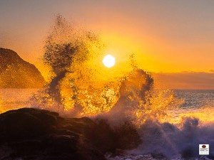 黄金の波しぶき