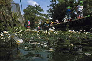 梅花藻の咲く頃
