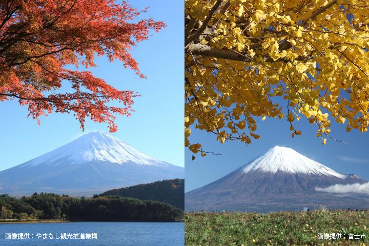 左は山梨県から見た富士山、右は静岡県から見た富士山。それぞれで富士山ナンバーの図柄を公募している