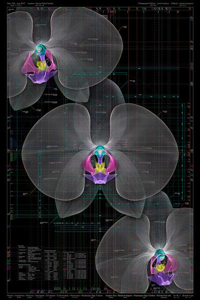 <i>Phal</i>. Sogo Yukidianⅰ- b、<i>Phalaenopsis</i> Sogo Yukidian - Multiple front view - b