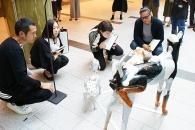 【イベント】TOKYO MIDTOWN AWARD 2019 アートコンペ最終審査 見学者を募集