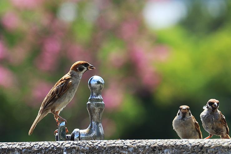 鳥たちに 水場取られて 乾く喉