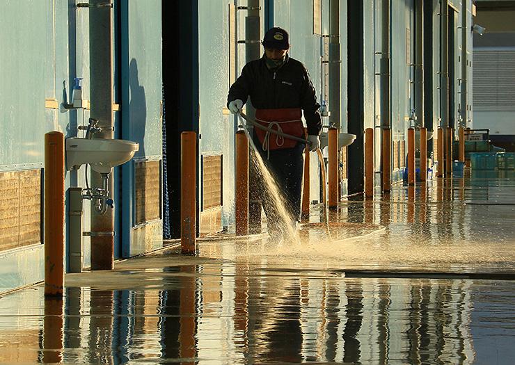 水光る 衛生管理 魚市場