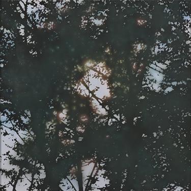 木漏れ日・慟哭