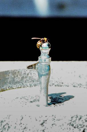 猛暑の日 干からぶ皆の 水飲み場