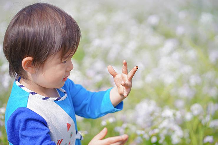 てんとう虫との戯れ/2歳10カ月