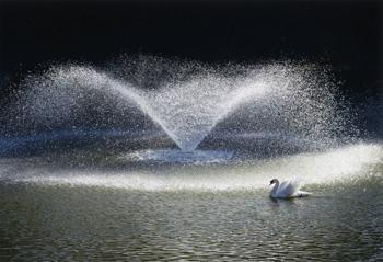 輝く水の翼