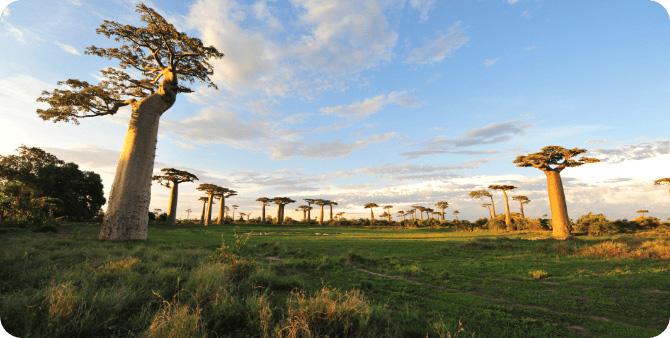PLACE マダガスカルの素顔