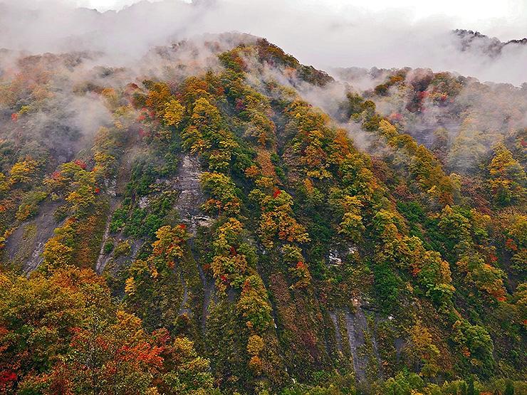 雨の奥裾花渓谷