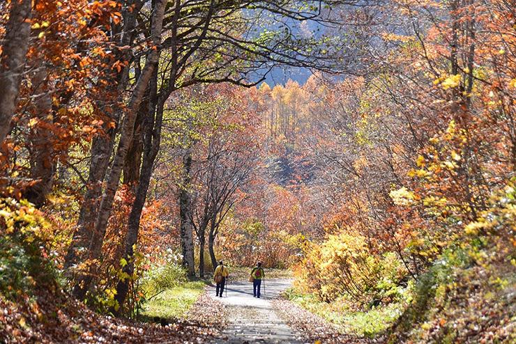 晩秋の山道を歩く
