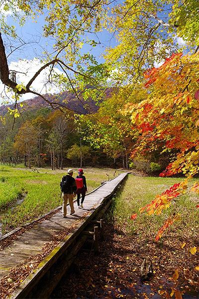 紅葉の木道を行く