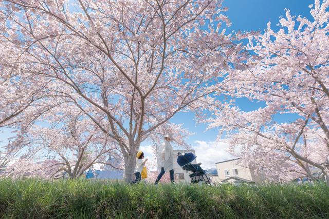 春風に背中を押される通園路